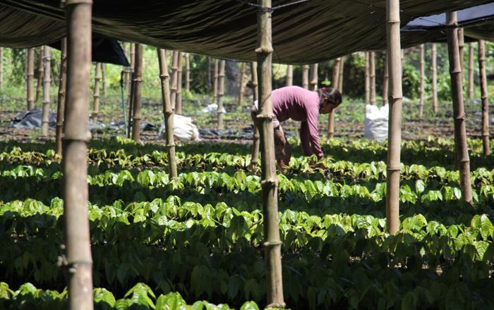 Puratos' new initiative will support cocoa farmers