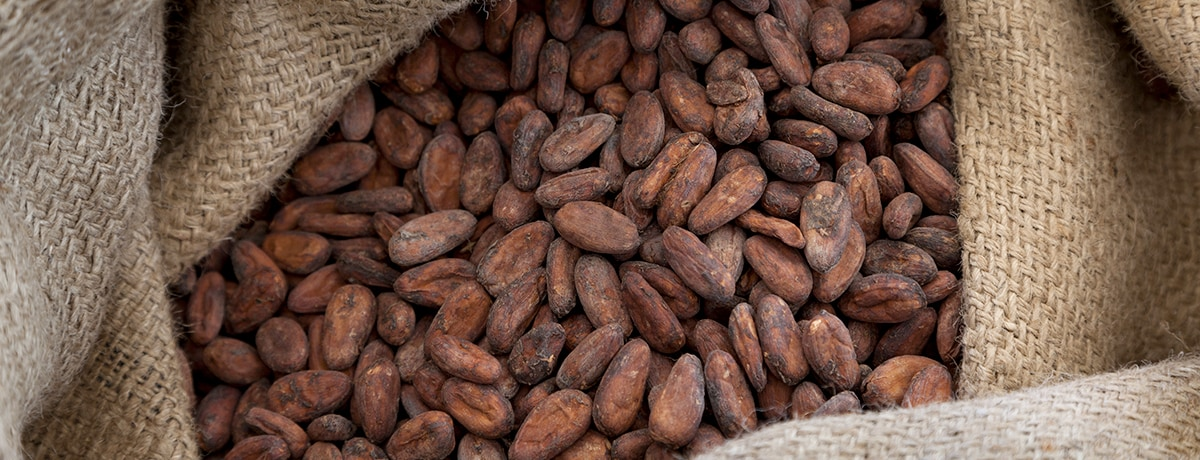 Ferrero reaches commitment to source 100% sustainable cocoa beans