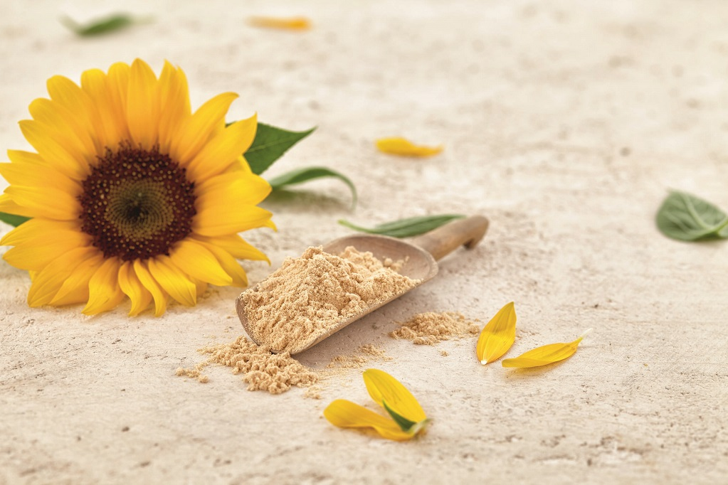 Sternchemie sunflower lecithin granted GRAS no-objection letter