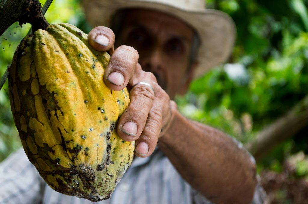 Olam Food Ingredients reaches Cocoa Compass targets