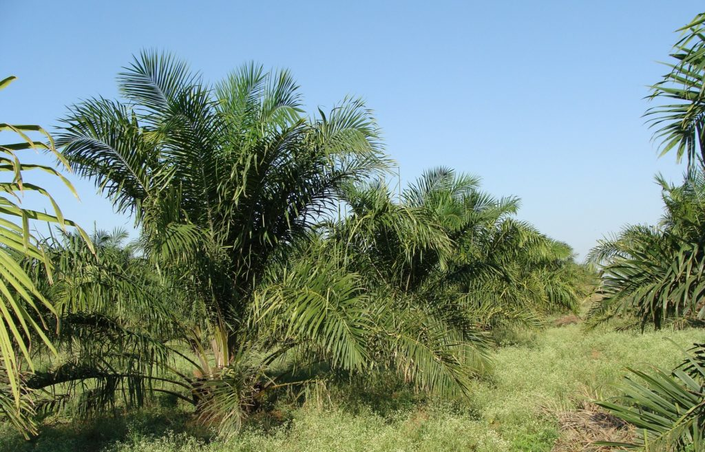 Ferrero releases 2020 palm oil progress report