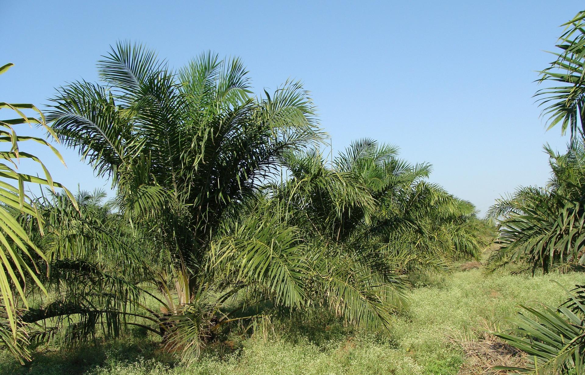Ferrero releases 2020 palm oil progress report